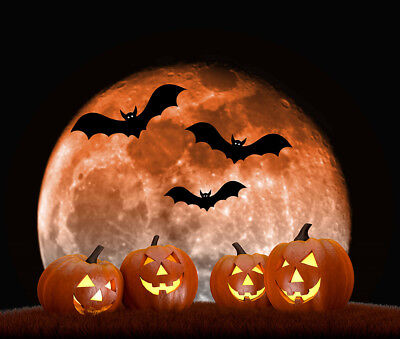 Scary Halloween Scene Full Moon Pumpkins Bats Vinyl Backdrop Photo Background - Halloween Background Scary