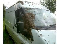 Bee Swarms collected for Free