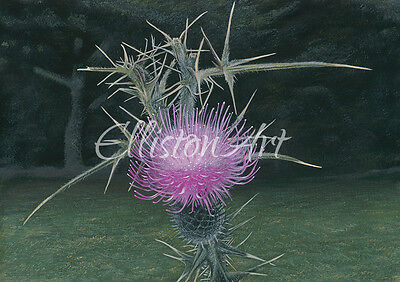 Scottish Thistle Floral Landscape Painting Giclee Print Wall Art A3 flower art