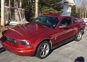 Mustang For Sale!