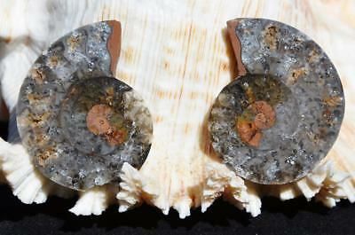 1132 RARE 1 in 100 BLACK Ammonite PAIR Deep Crystals MEDIUM FOSSIL 26grams 41mm