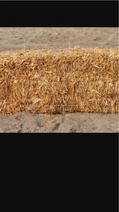 Looking for square straw bales