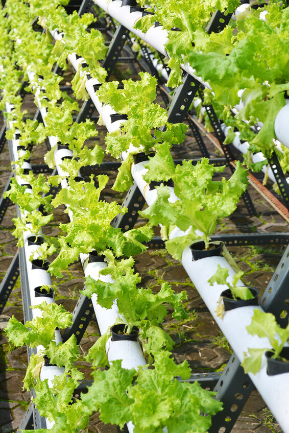 How to Set Up a Hydroponics System