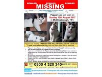***MISSING CAT FROM BOW STREET, MIDDLESBROUGH***