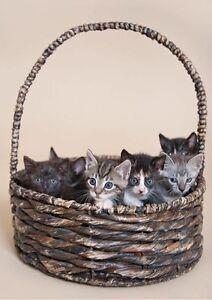 Kittens x5 Ipswich Ipswich City Preview