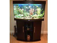 Jewel panorama fish tank