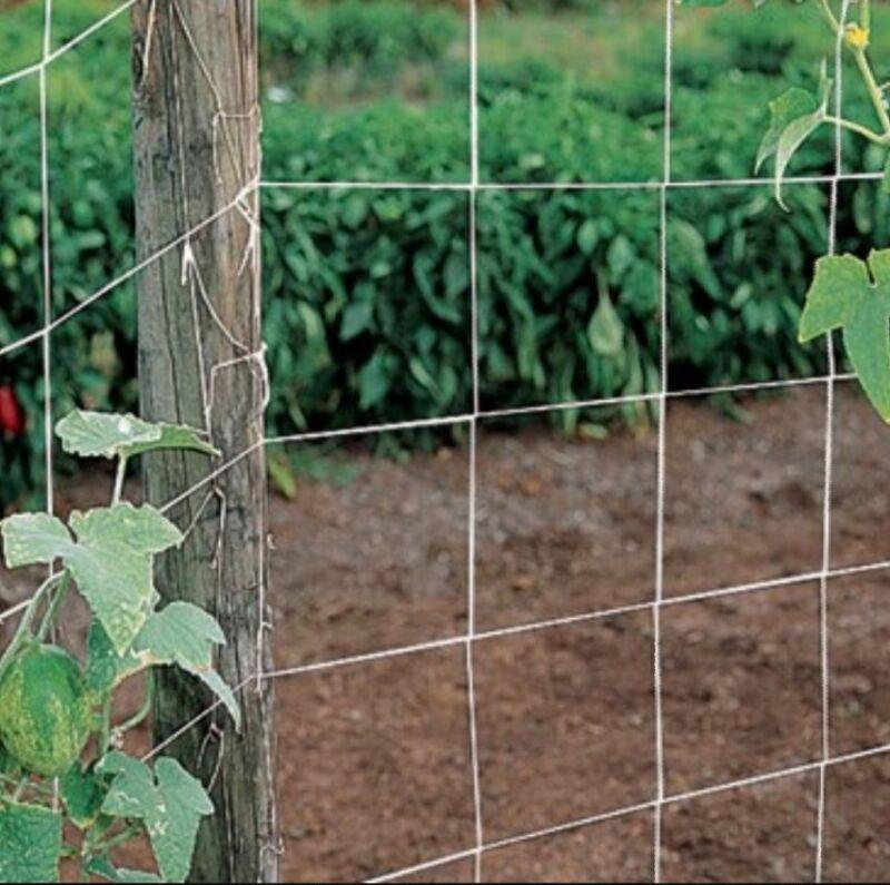 50 ft of garden trellis  netting