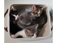 4 beautiful, fluffy and playful kittens for sale.