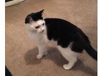 Cat needing rehomed free