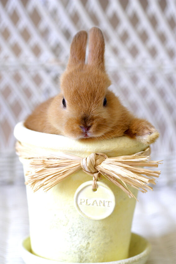 8 Must-have Accessories for a Rabbit