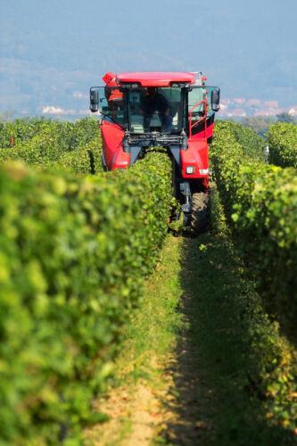 Aus der Weinlese nicht wegzudenken:Traubenwagen und Bütten