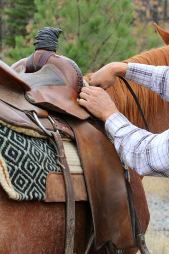 How to Care for a Leather Saddle