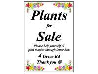 Plants for sale~Aylestone