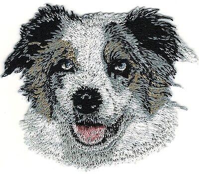 Australian Shepherd Portrait (3 1/4