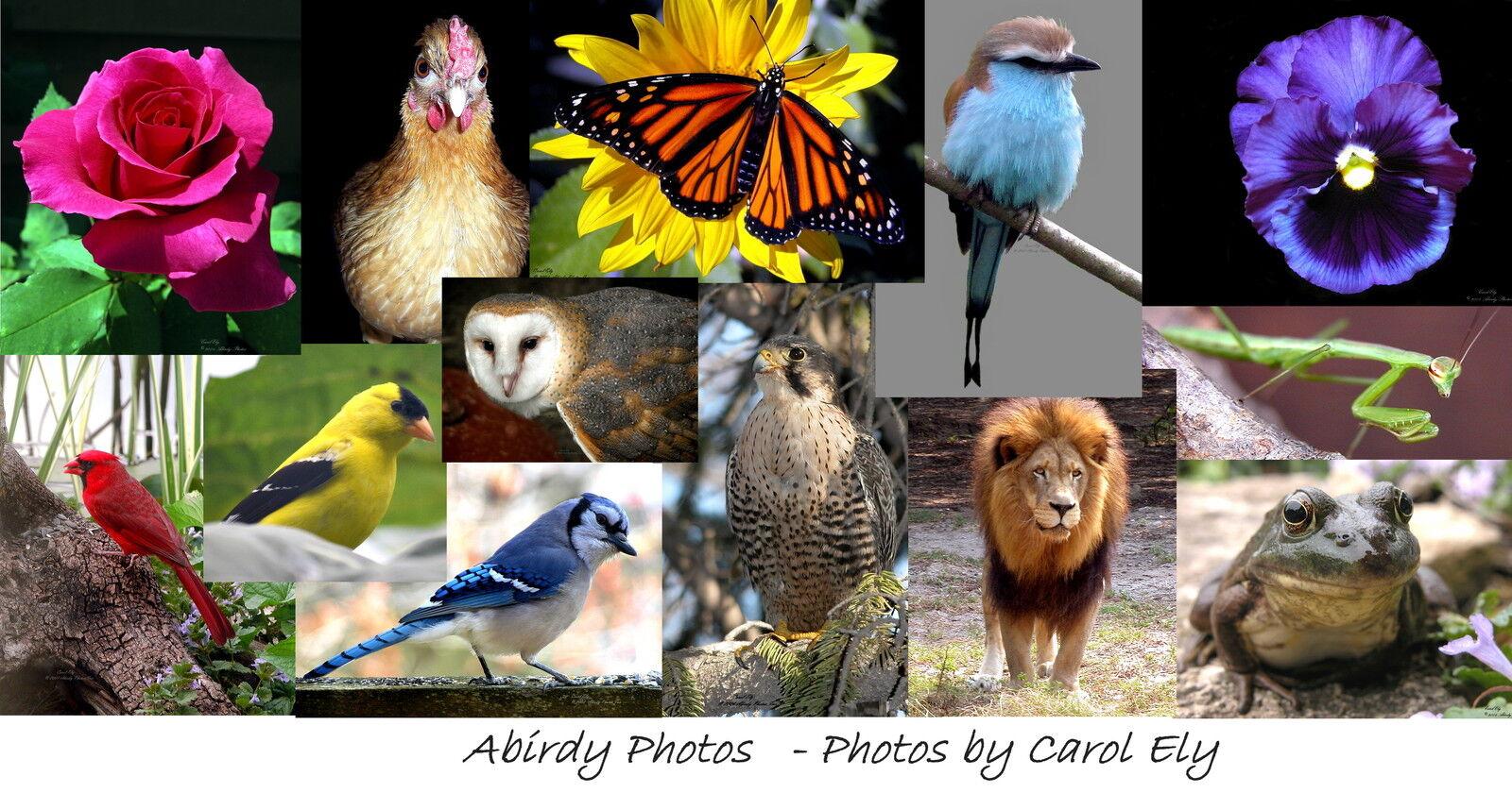 Abirdy Photos,  photos by Carol Ely
