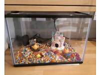 Starter fish tank with small pump and accessories