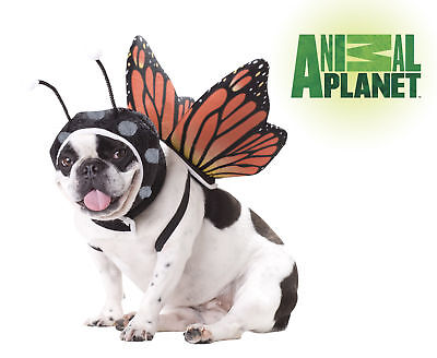 Dog Butterfly Costume (Butterfly Dog Fairy Costumes Animal Planet)