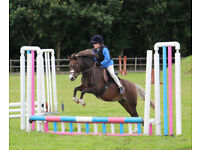 11.2hh, 12 year old mare