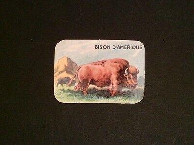 ANIMALS BISON WISENT BUFFALO BISONS WISENTE - SEHR ALTES SAMMELBILD c5675