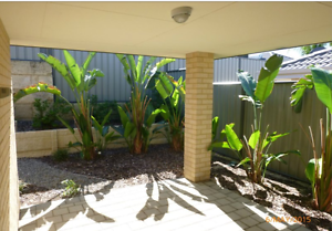 ROOM TO RENT! Looking for a house mate! Baldivis Rockingham Area Preview