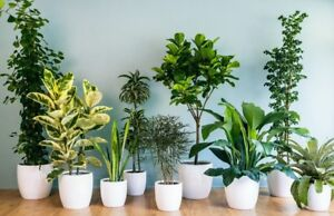 Looking for houseplants