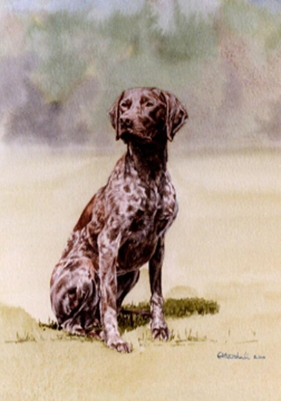 German Shorthaired Pointer Art Print by UK Artist CAH Marshall*