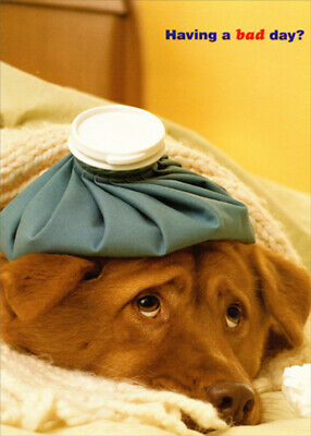 Designer Greetings Dog with Bag of Ice on Head Get Well Card Get Well Bag