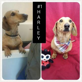 4PAAWS Mobile Dog Grooming