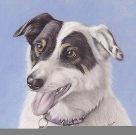 Pet portraits in pastel from £30 for a 10x10 inch portrait or an A4 portrait of a single pet.