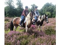 Wonderful week day hacking available in Arborfield