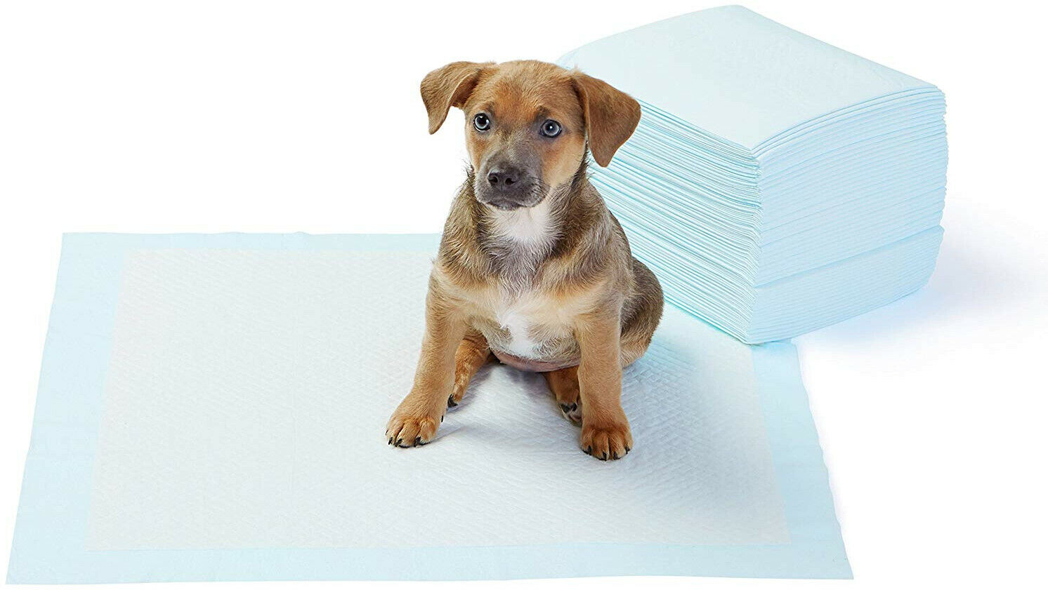 Basics Puppy Pads Hygieneunterlagen für Haustiere 56 x 56 cm Saugstark 50 Stück