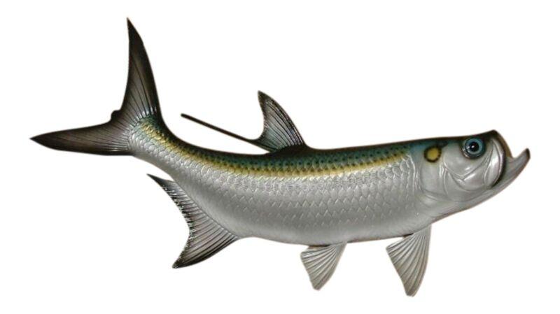 Replica Tarpon Saltwater Game Ocean Fish Wall Decor 28 inch