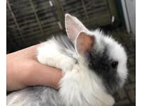 Bunnies for sale!