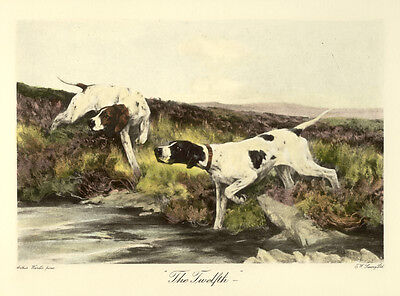 POINTER ENGLISH DOG WORKING GUNDOG FINE ART PRINT ENGRAVING by ARTHUR WARDLE
