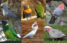 Tamed Parrot from the list below Westmead Parramatta Area Preview