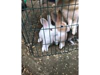 2 adorable baby rabbits ready for a new loving home