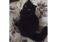 LOST CAT BALLYMENA