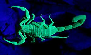 Scorpions, Tarantulas, Centipedes & Snails Para Hills West Salisbury Area Preview