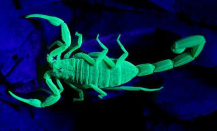 Scorpions, Bird Eating Spiders, Centipedes & Snails