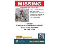 Missing Galah Cockatoo, Little Sutton, Ellesmere