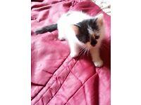 kitten - little girl