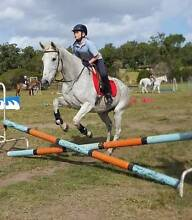 Lovely grey mare Cessnock Area Preview