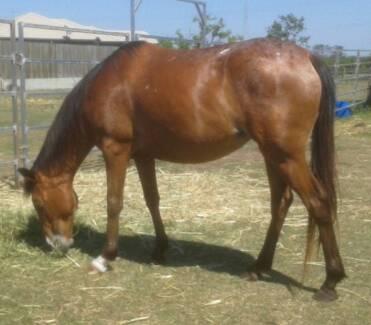 ready to break mare Wynnum West Brisbane South East Preview