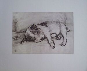 Played out - Lucy Dawson - Mac - 34cms x 30cms vintage dog litho print