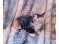 Beautiful kitten ❤❤❤