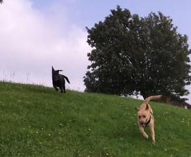 Dog walking and pet sitting in BS5, BS15 and surrounding areas