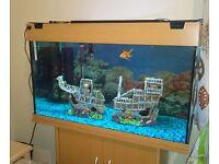 Rio Juwel Fish Tank 125 for sale