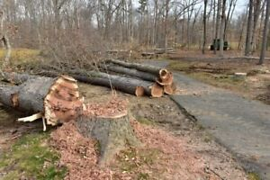 Tree cutting/free estimate