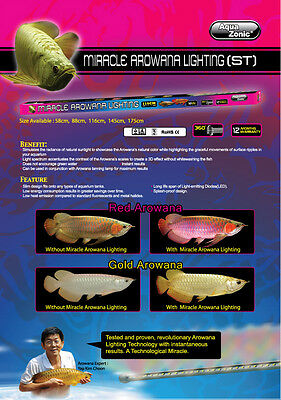 AQUAZONIC ST GOLD AROWANA MIRACLE LIGHT (116 CM) 18 W