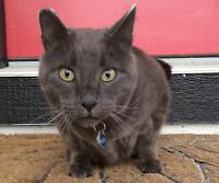 Wanted: LOST - Grey Cat in Ranchland Estates - $$ Reward
